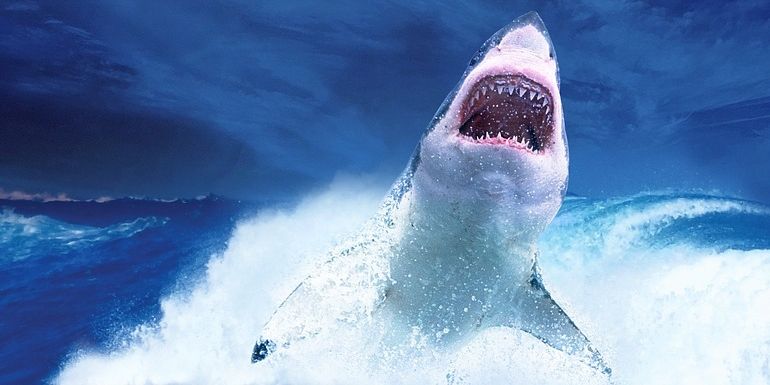 shark tank tokens